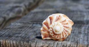 coquillage spirale